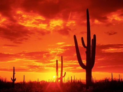 Burning_Sunset-Saguaro_National_Park-Arizona.jpg